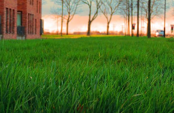 aérer la pelouse, aération pelouse,