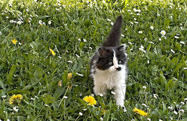 traitement des mauvaises herbes, enlever les mauvaises herbes,