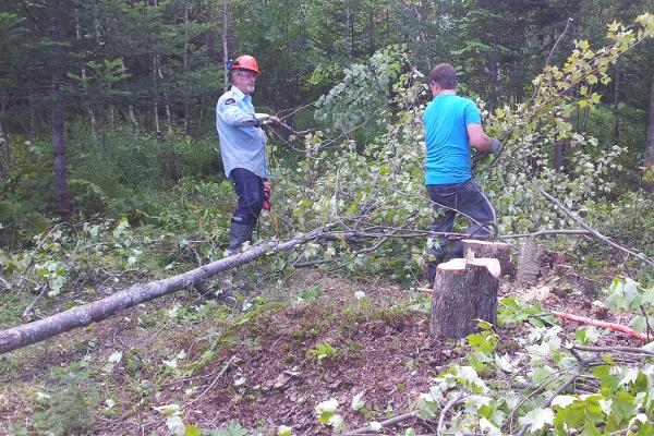 billot de bois, coupe d'arbres,