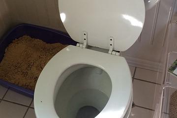 nettoyer une toilette, laver la toilette,