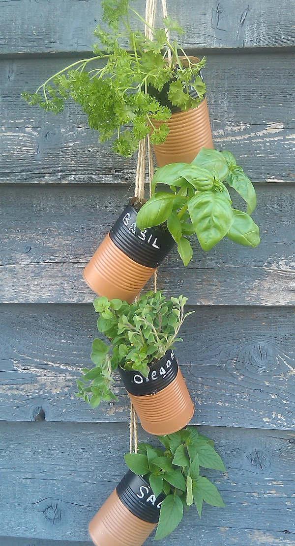 Faire pousser des fines herbes dans des boites de conserves