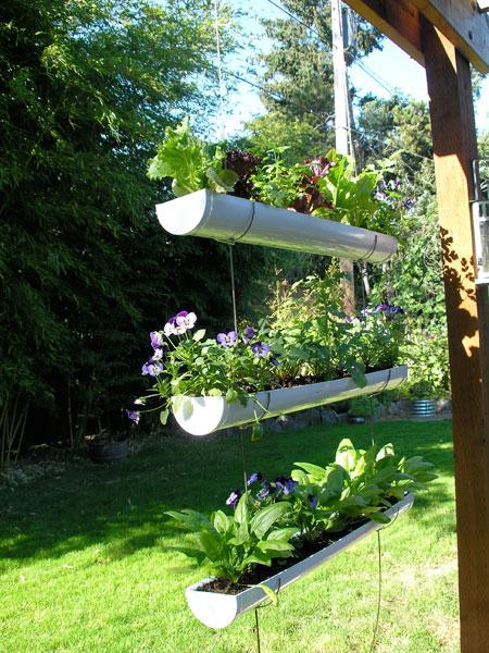 Cultiver des fines herbes dans une gouttière