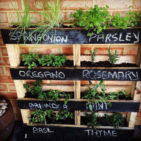 faire pousser des fines herbes sur une palette de bois