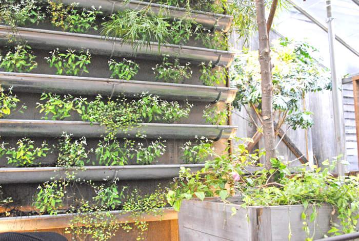 Utiliser des gouttières pour faire un jardin vertical