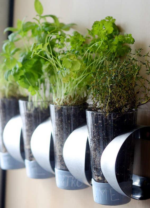 Rack à vin pour cultiver les fines herbes