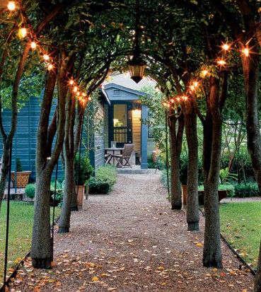 guirlande de lumières dans des arbres et branches